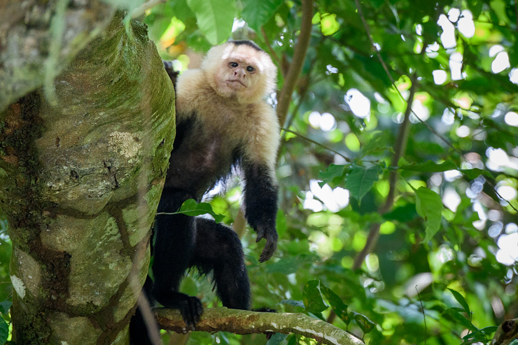 20160218 - Costa Rica (Mangrove Tour) - 620.jpg