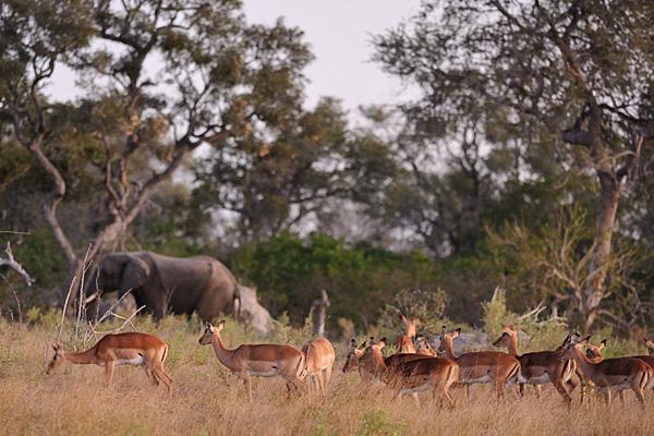 Destinations amazing and ordinary...Botswana definitely falls in the amazing category!