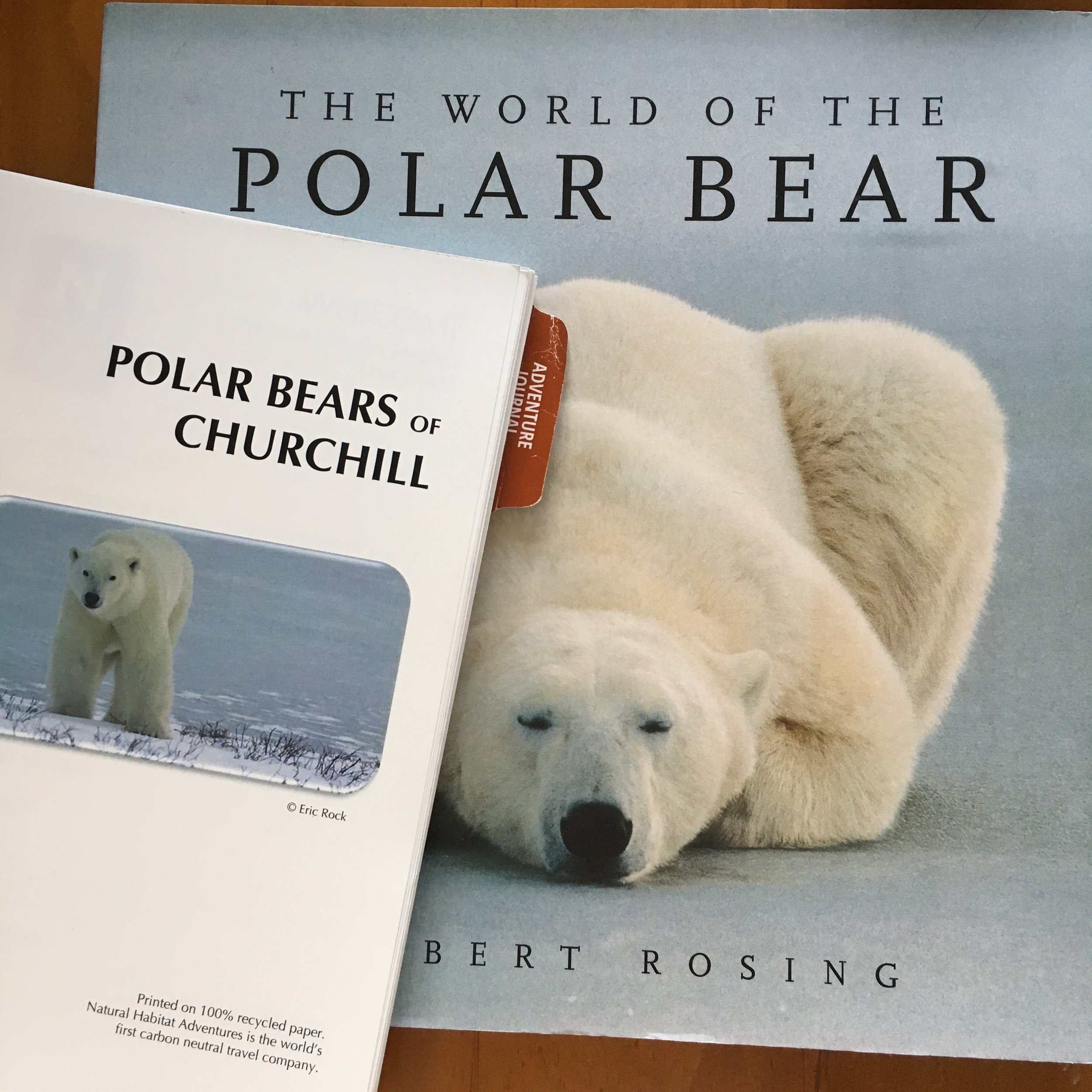 Please follow us on one of our platforms, and share our posts while we explore the Polar Bears of Churchill!