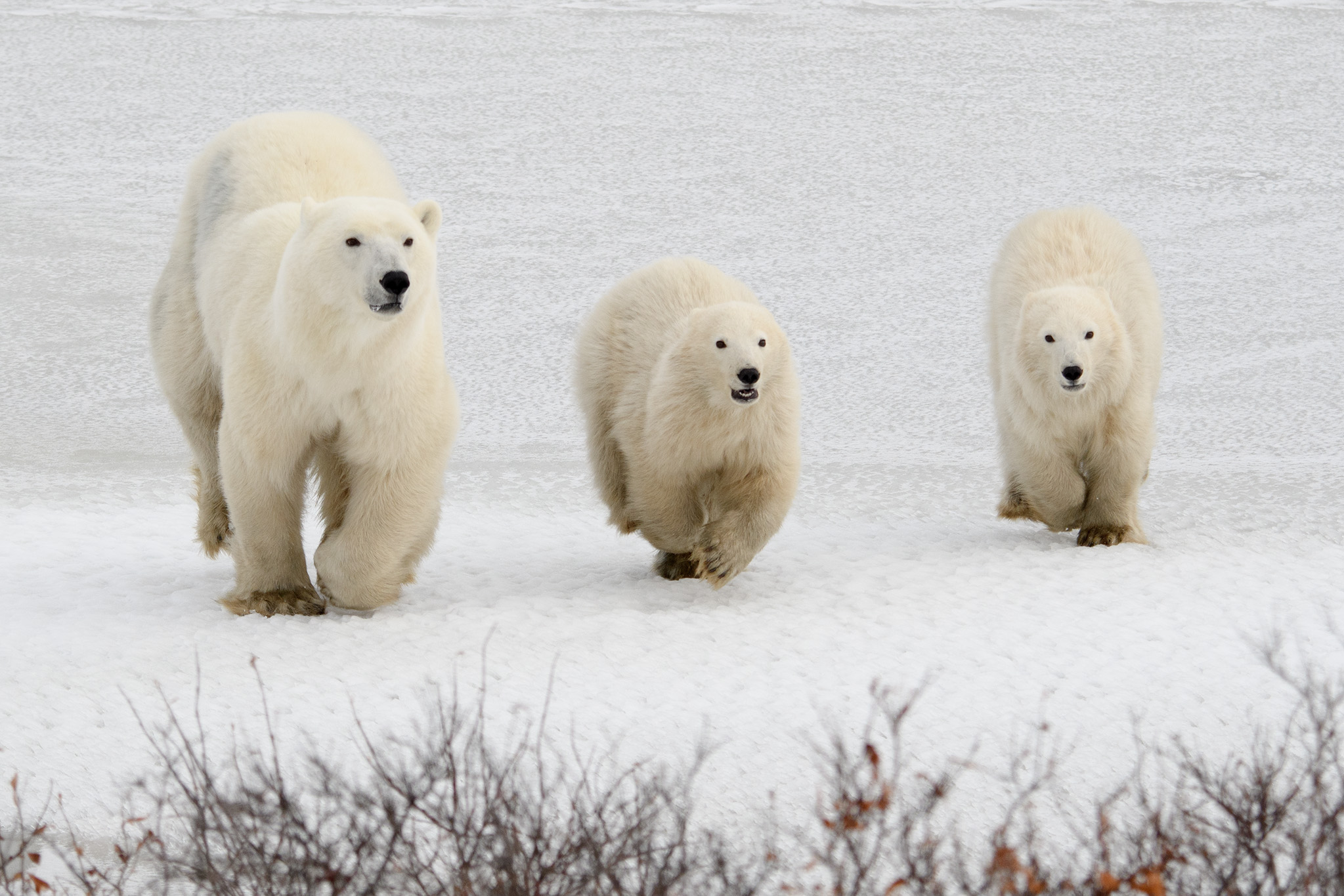 The family ran towards our tundra vehicle at top speed