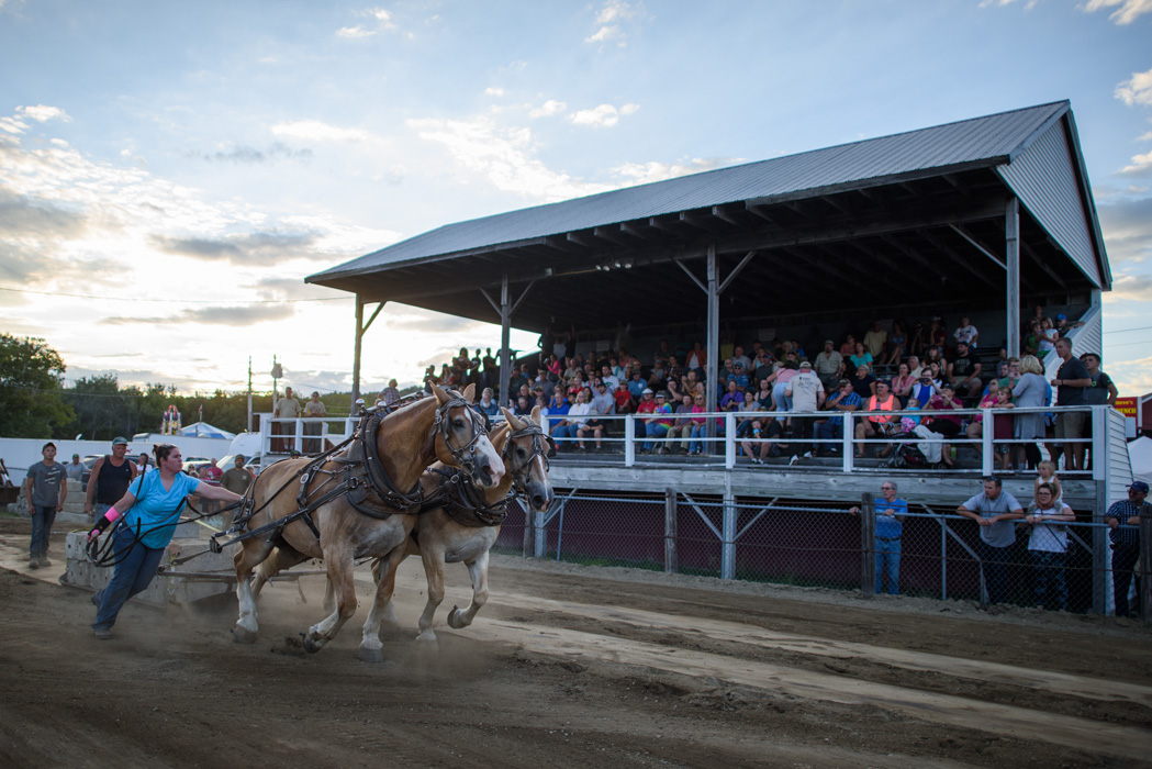 At a traditional agricultural country fair, draft horses show their prowess during a  pulling  competition.
