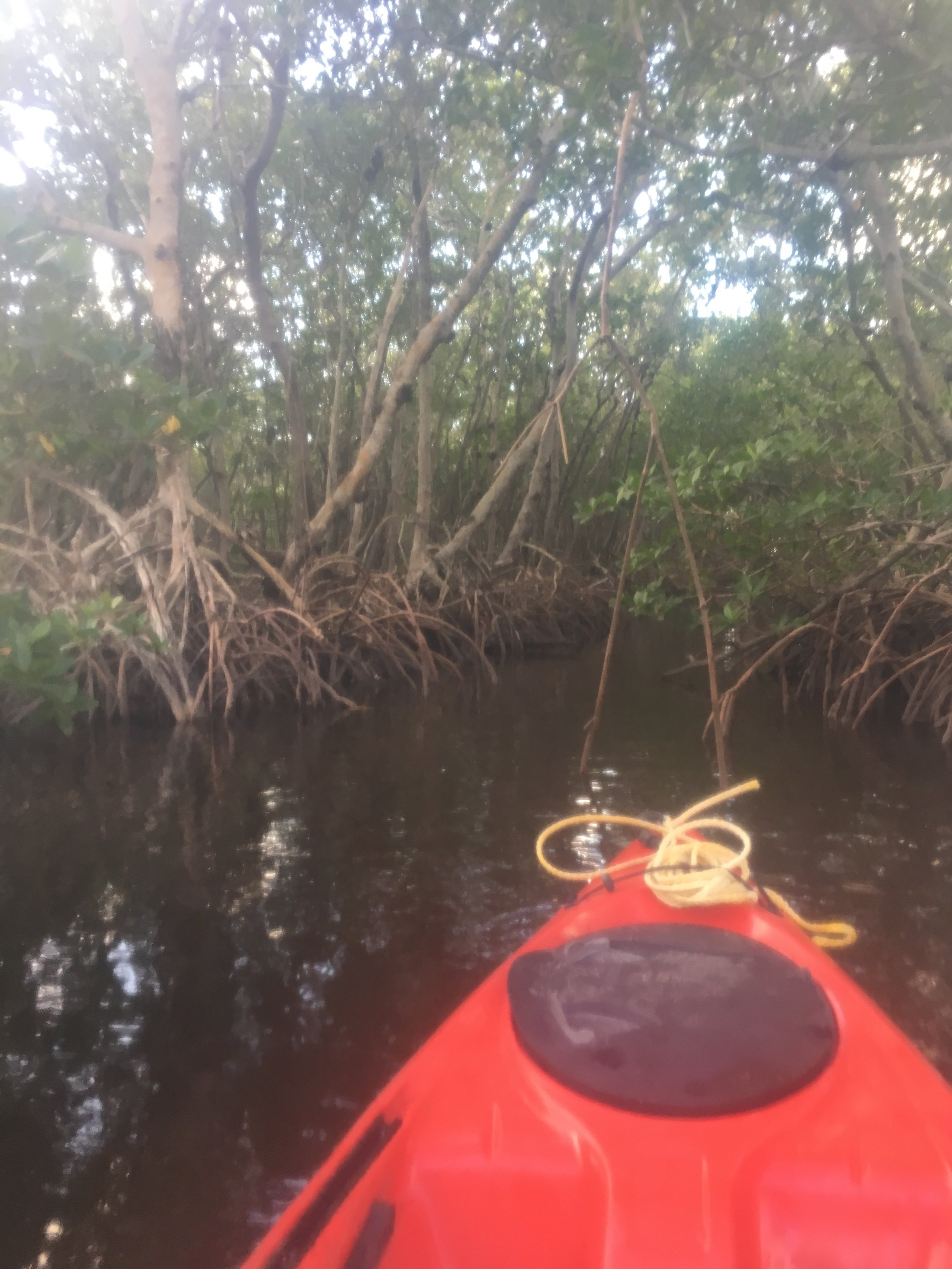 Kayaking in the mangroves
