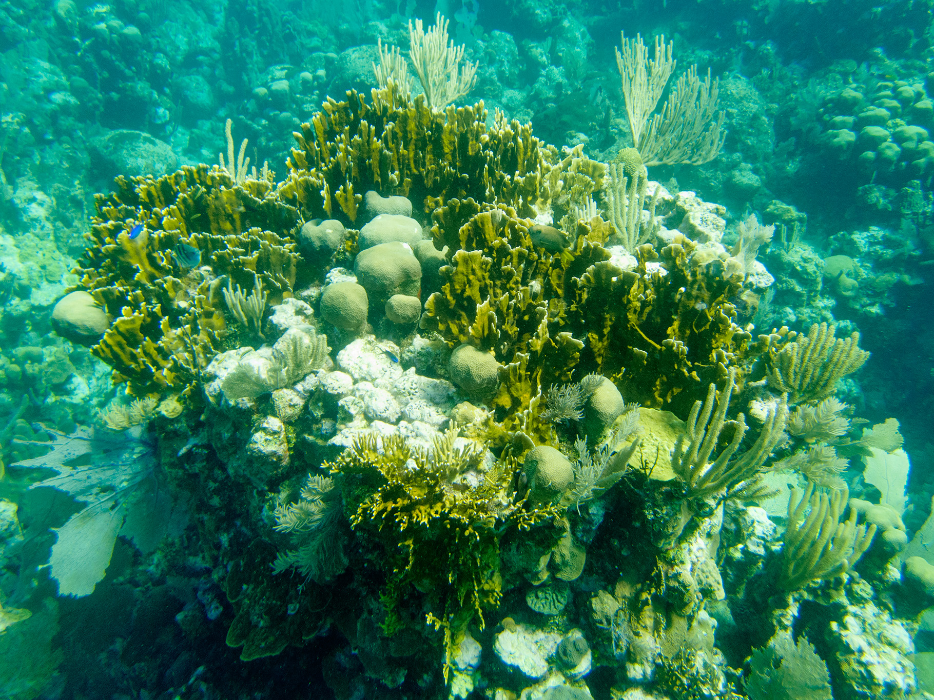 The coral in this area was incredible; very colorful and varied with many different kinds of coral growing in the ocean along the MesoAmerican Reef.