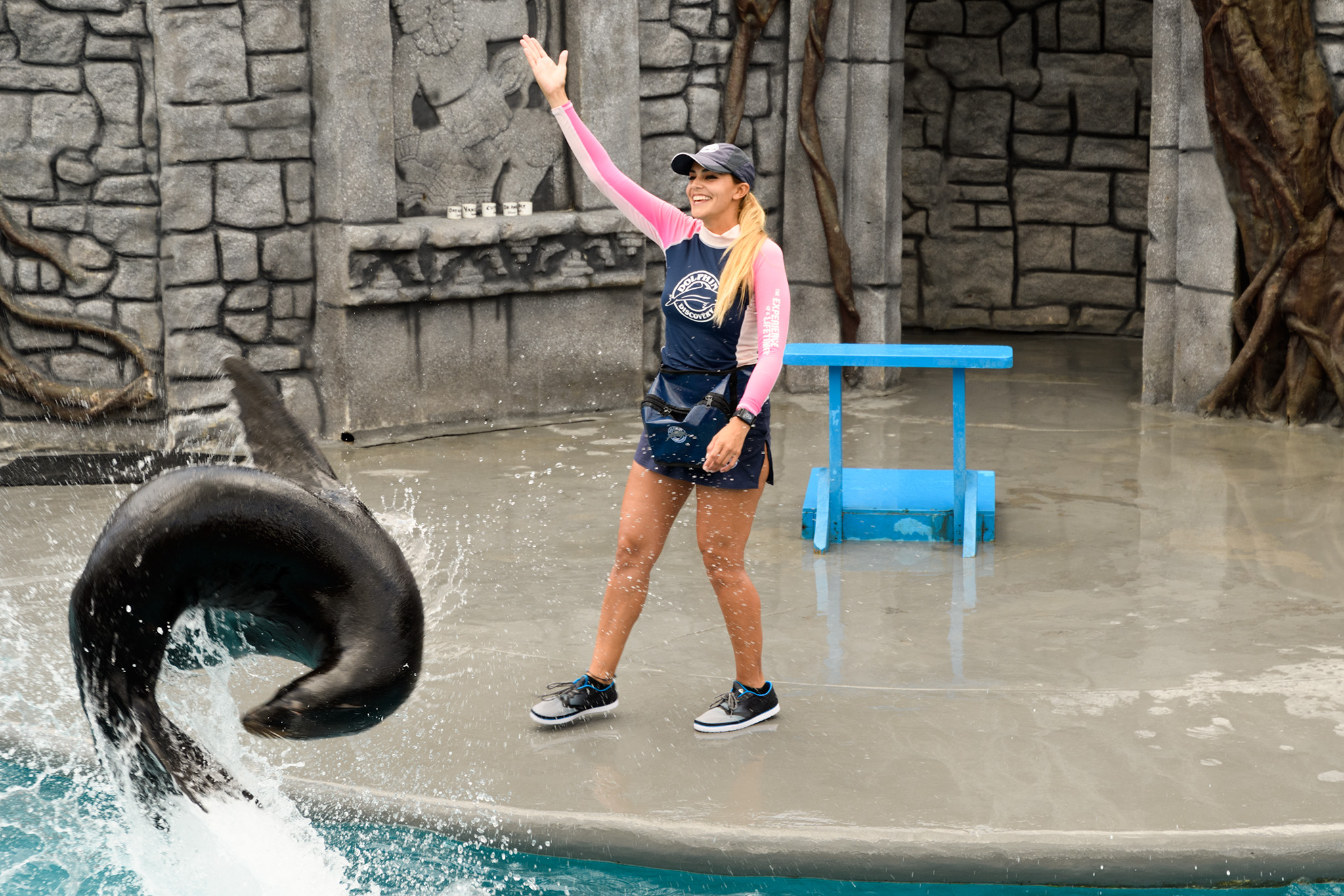 A large marine park is part of the Chankanaab park, where dolphins, sea lions and manatees are raised.