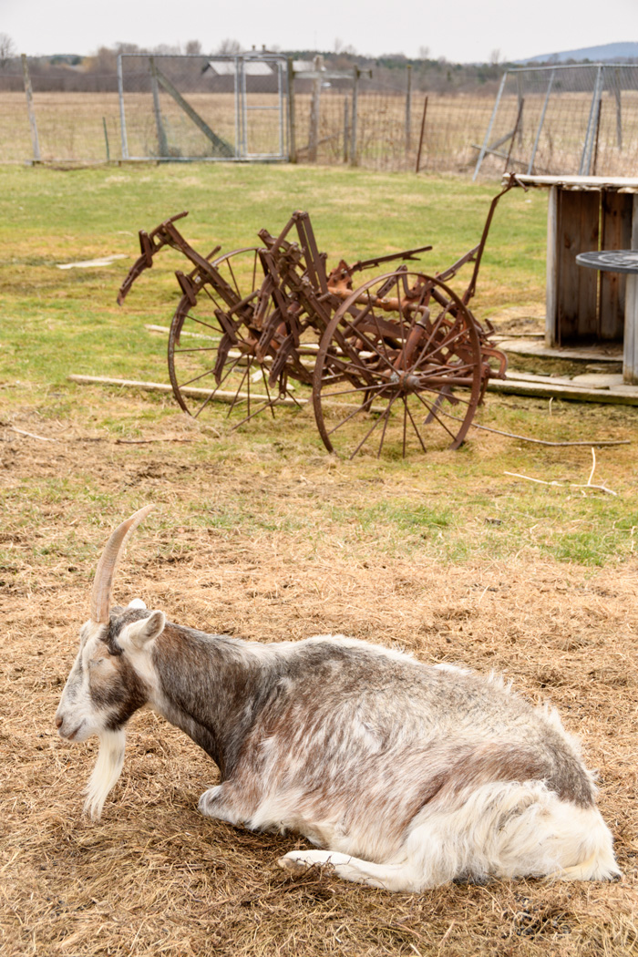 There are a few small animals to enjoy watching at the farm. An enterprising local farmer offers hay rides with a draft horse for $1 a child.