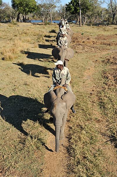 20100622 - Elephant Safari - 017.jpg