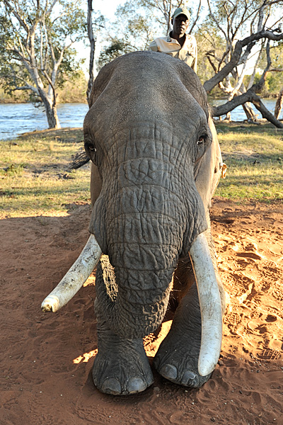 20100622 - Elephant Safari - 195.jpg
