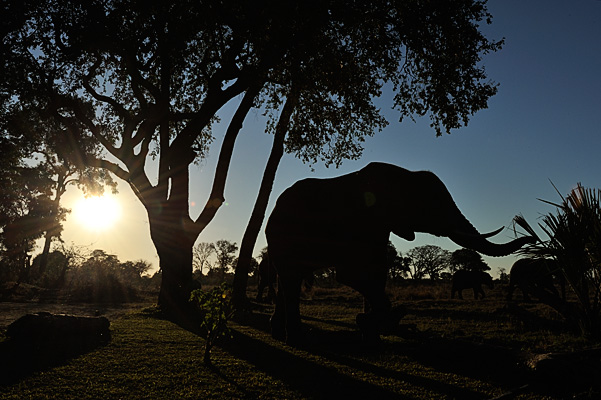 20100622 - Elephant Safari - 220.jpg