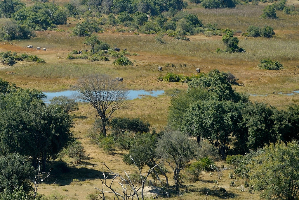 A helicopter ride over the Okavango Delta allowed us to see the landscape and herds of elephants roaming!