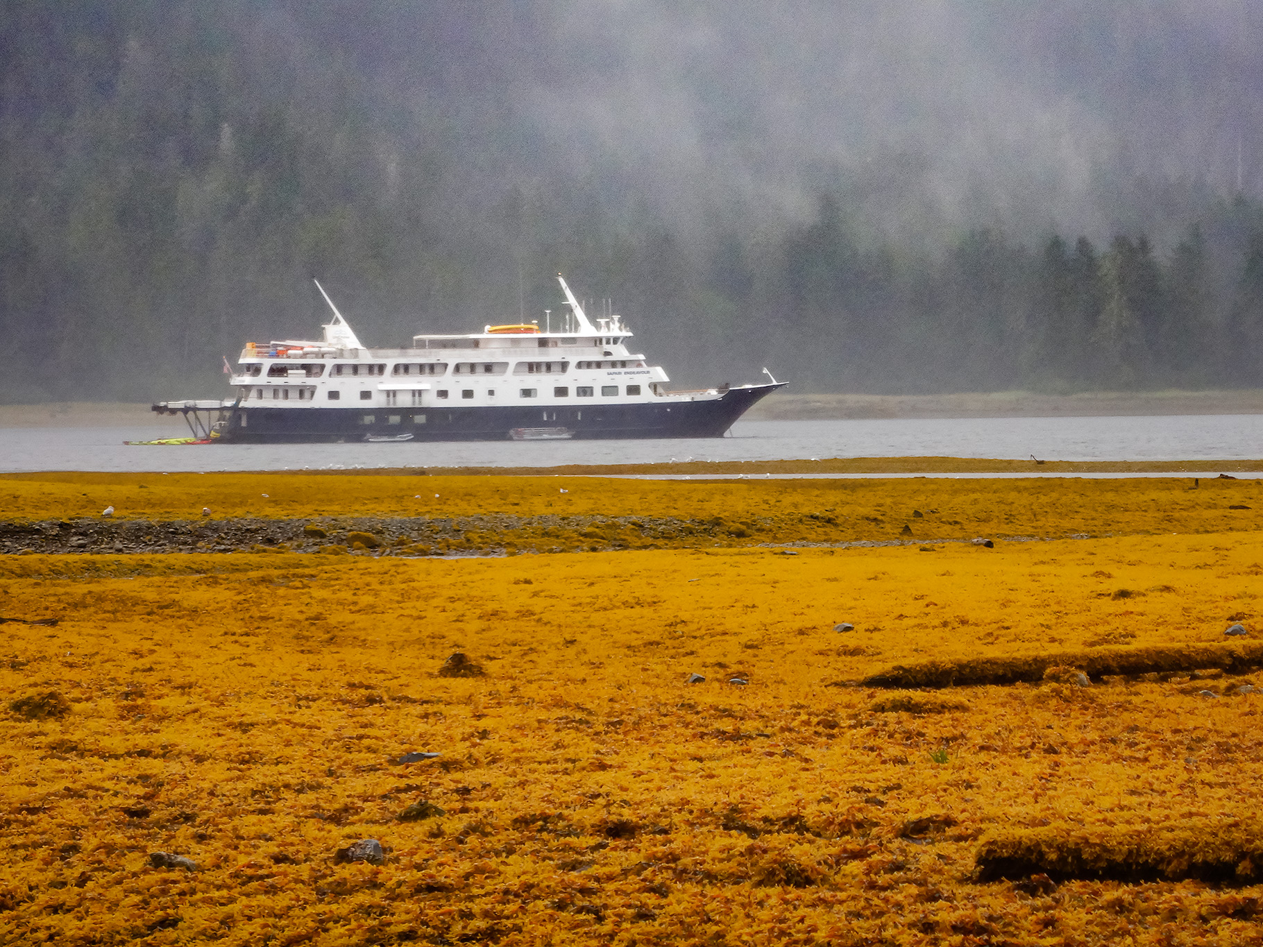 Safari Endeavor in the Sukoi Inlet