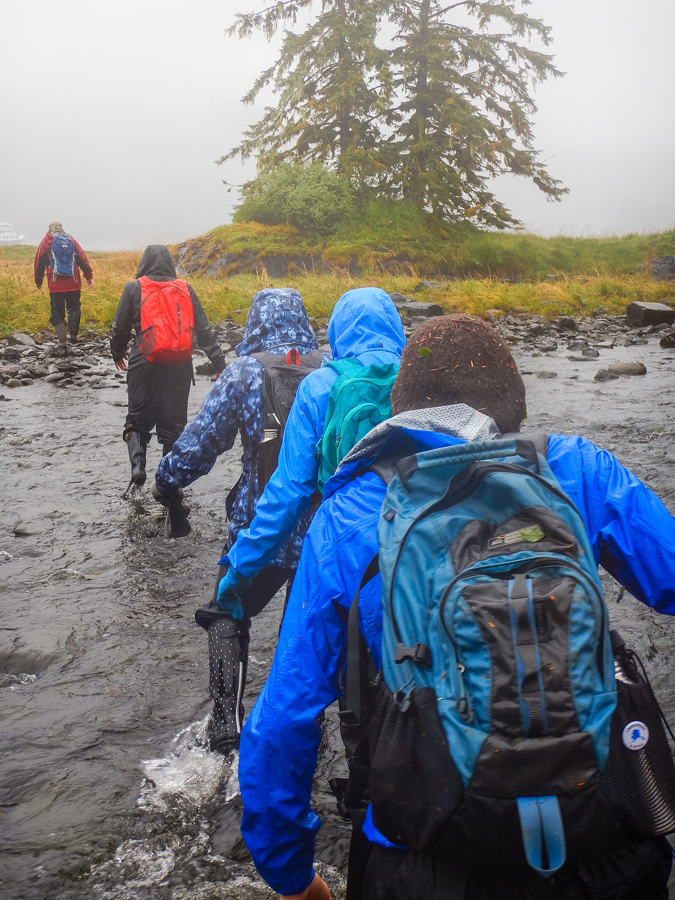 Our guide Krista leads the way on a shore walk through a small stream with spawning salmnon.