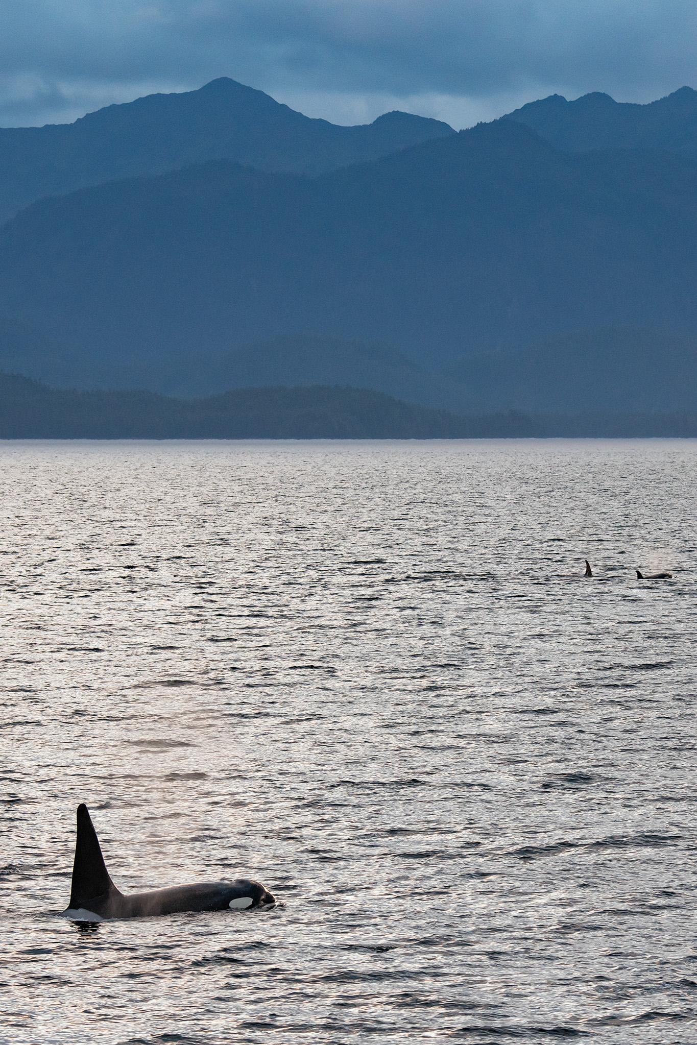 20180814 - Kelp Bay - 609.jpg