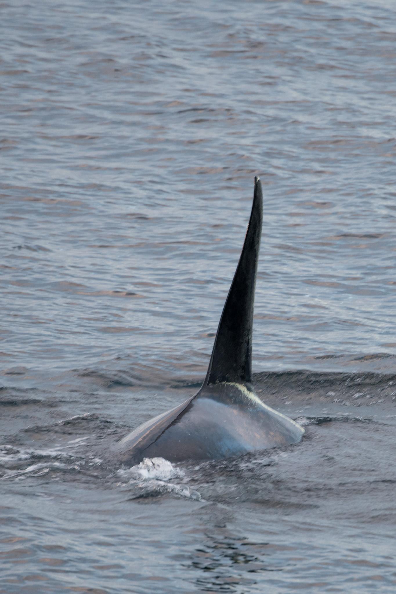 20180814 - Kelp Bay - 526.jpg