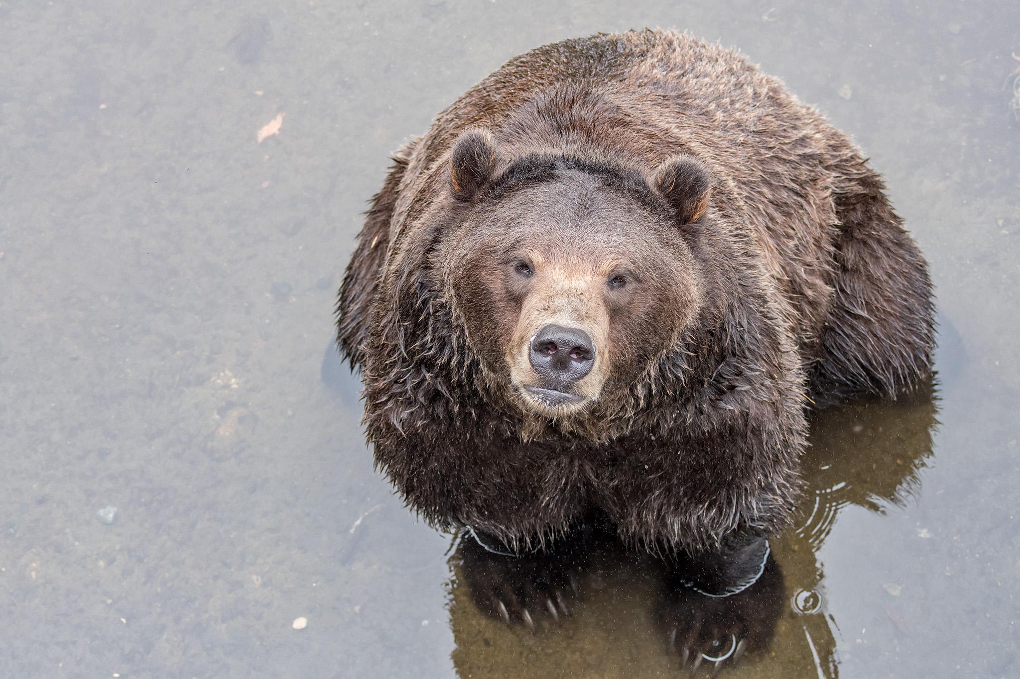 20180812 - Sitka Raptor Center & Fortress of the Bear - 422.jpg