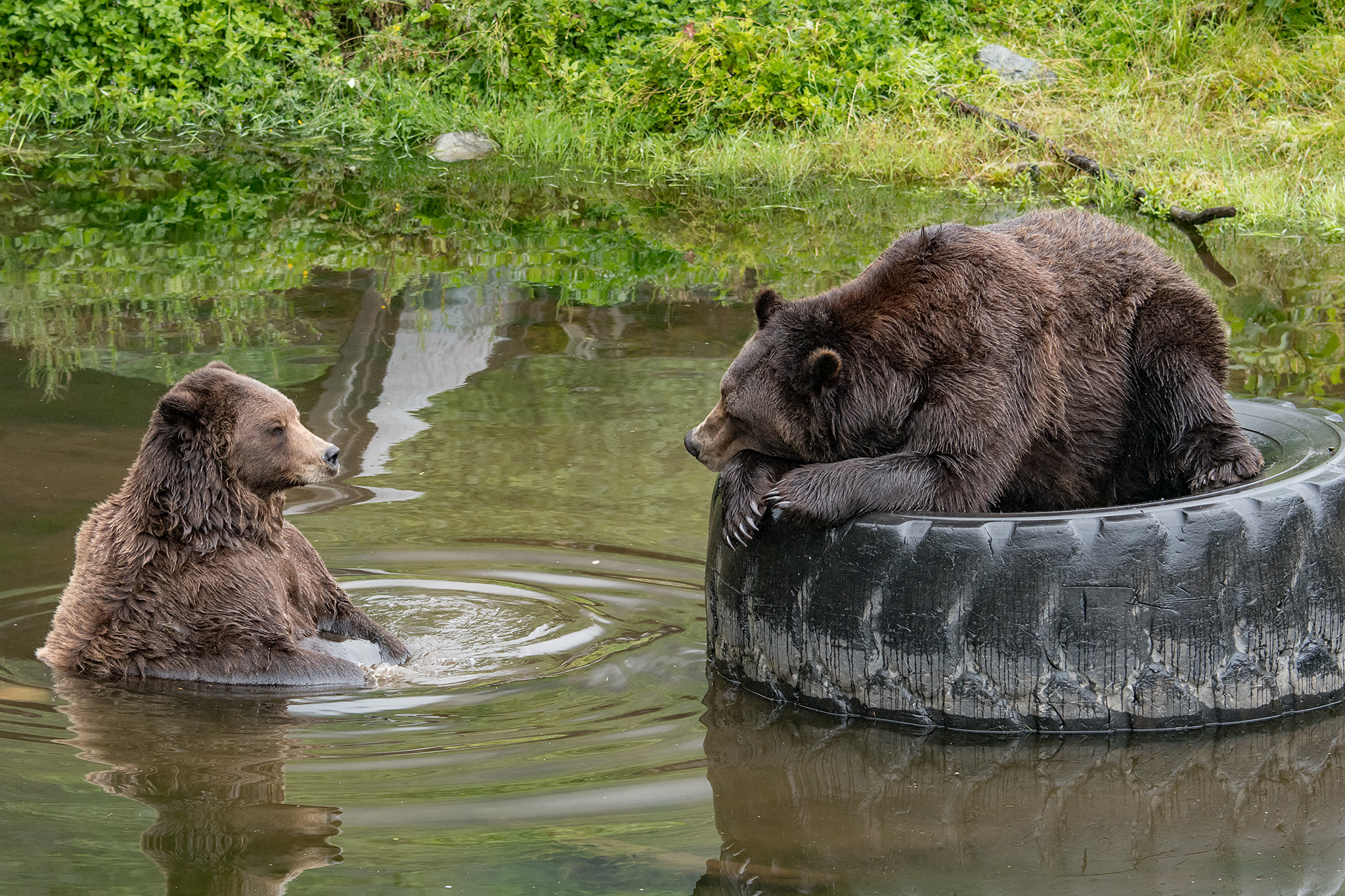 20180812 - Sitka Raptor Center & Fortress of the Bear - 194.jpg