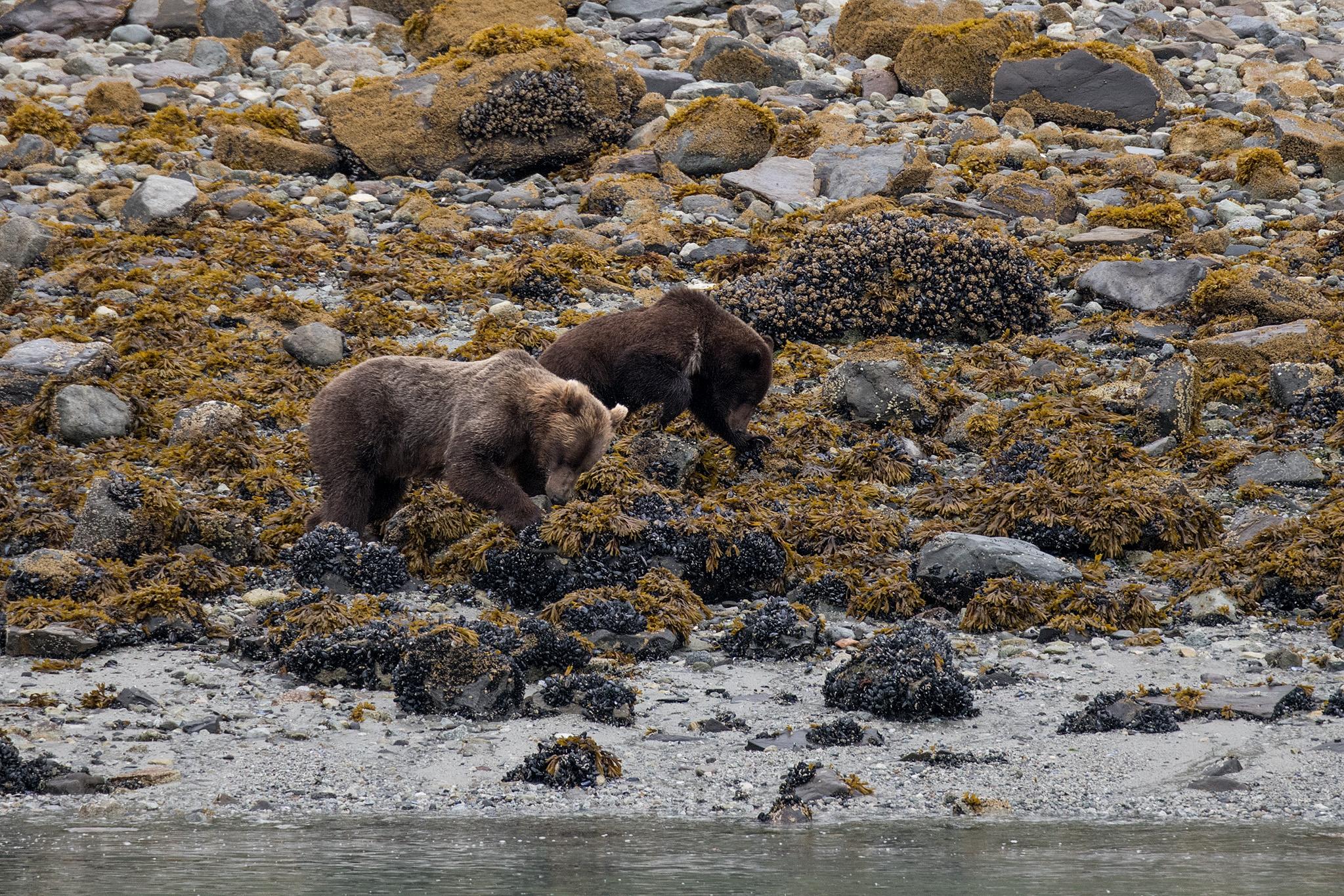 20180816 - Glacier Bay - 0575.jpg