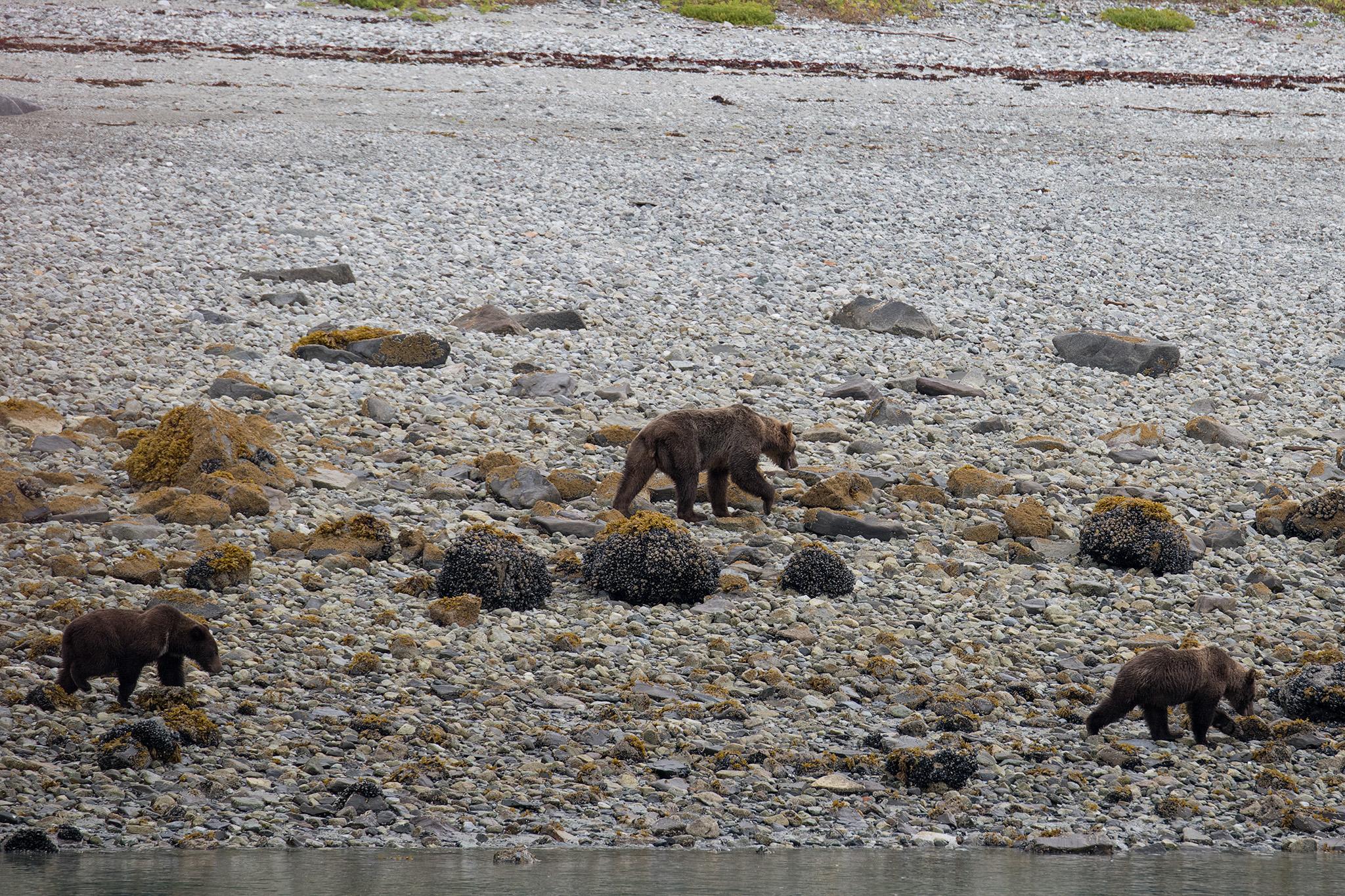 20180816 - Glacier Bay - 0609.jpg