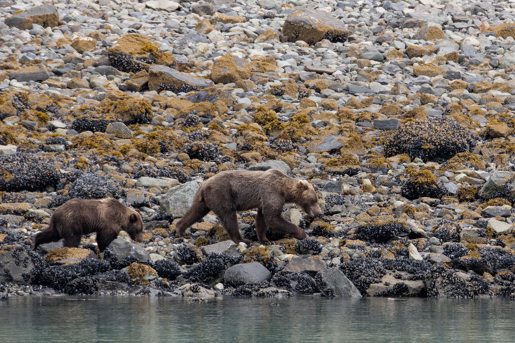 20180816 - Glacier Bay - 0699.jpg