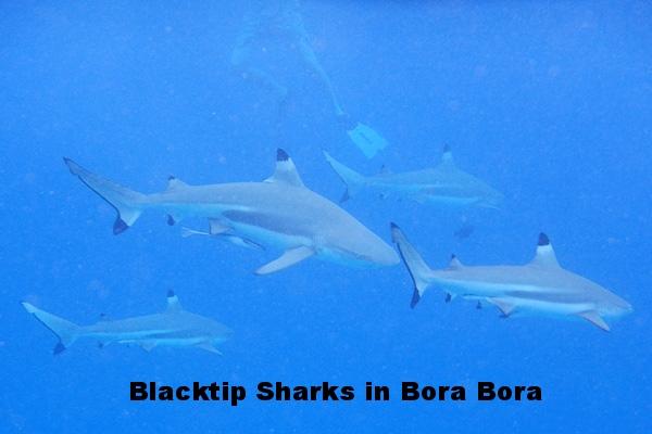 20121009 - Bora Bora (AW) - 0055.jpg