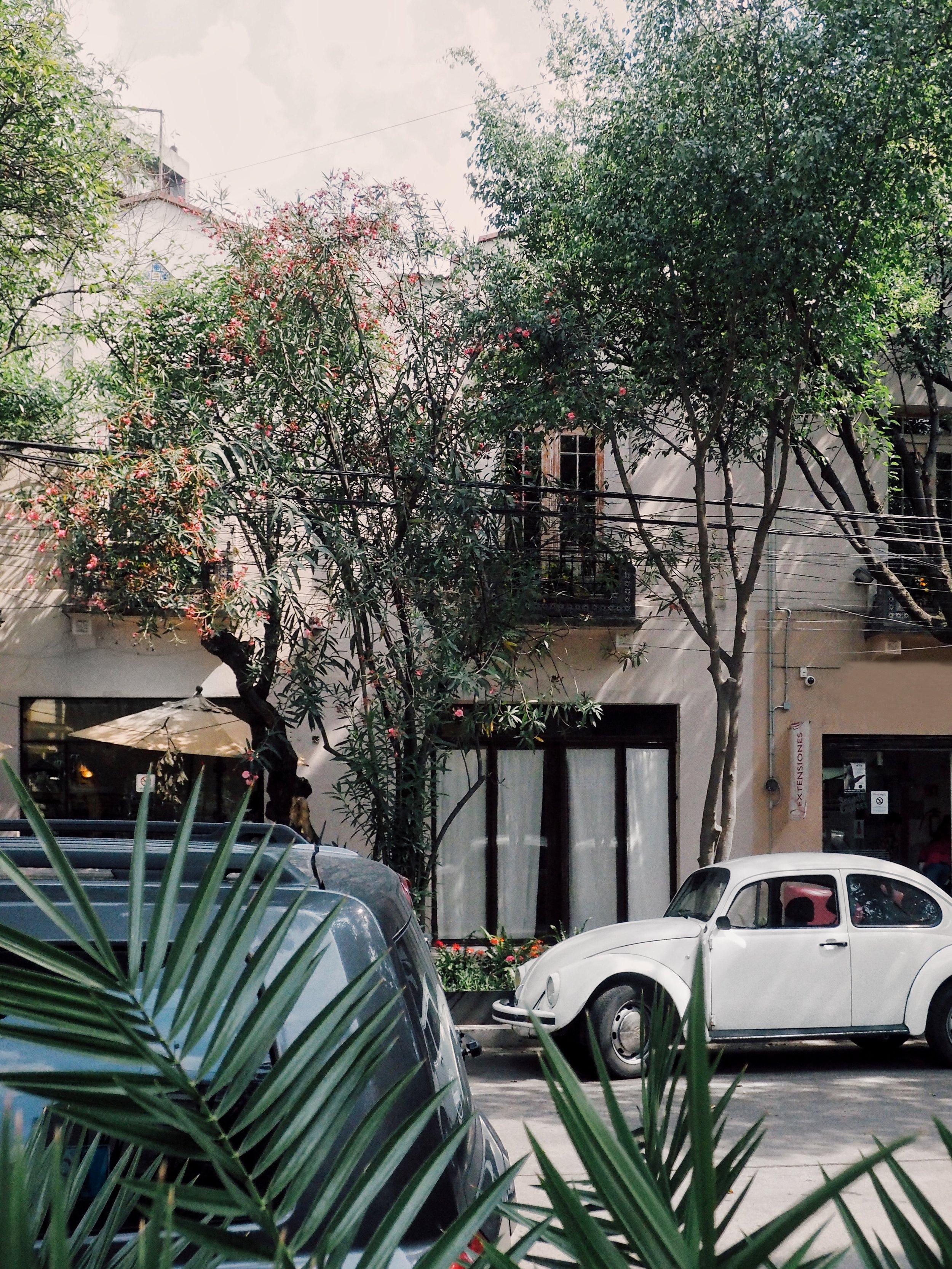 MEXICO CITY STROLLS -