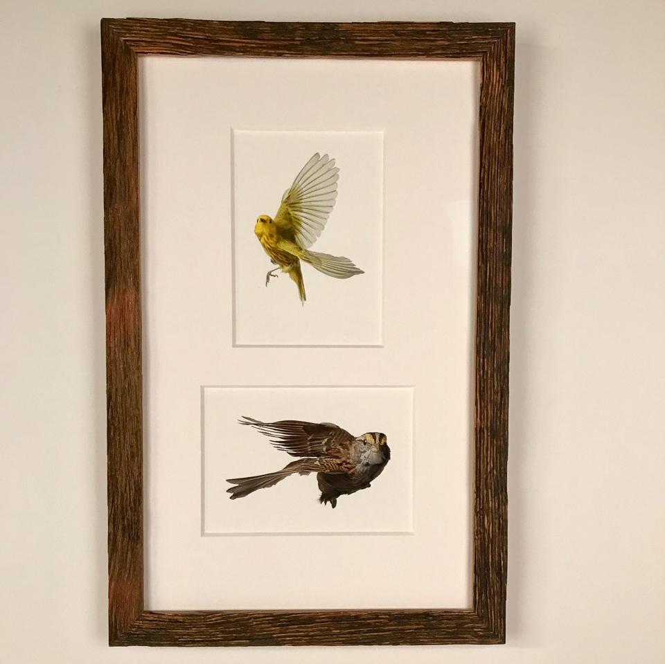 Prints by Wild Birds Flying framed in reclaimed wood.