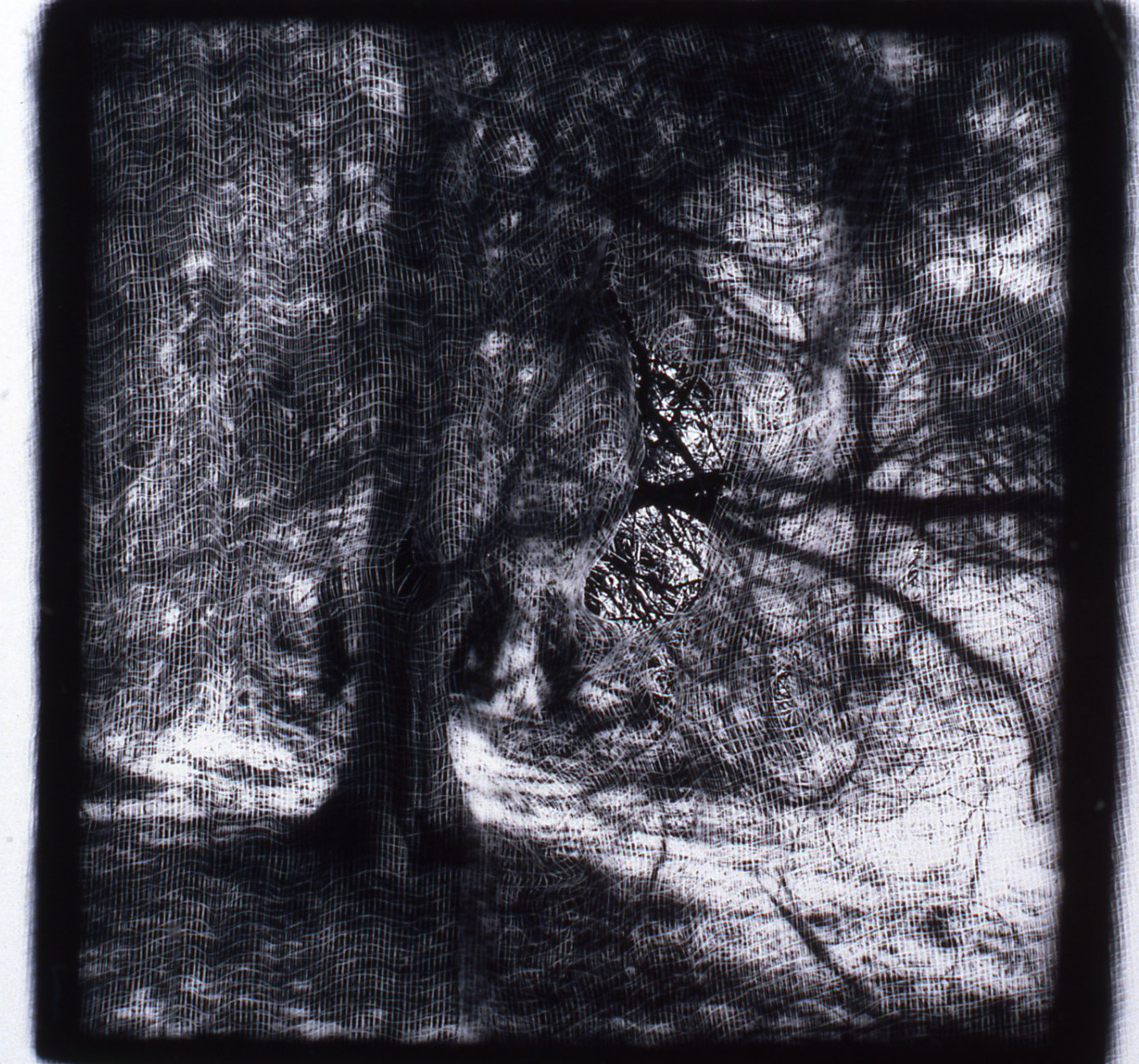 Passages Tree  , Gelatin Silver print, 10x10 inches, 1989-1990, unique print