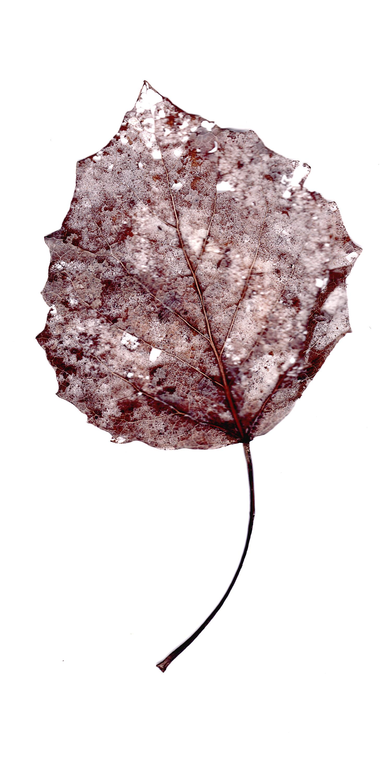 leaves0004.jpg