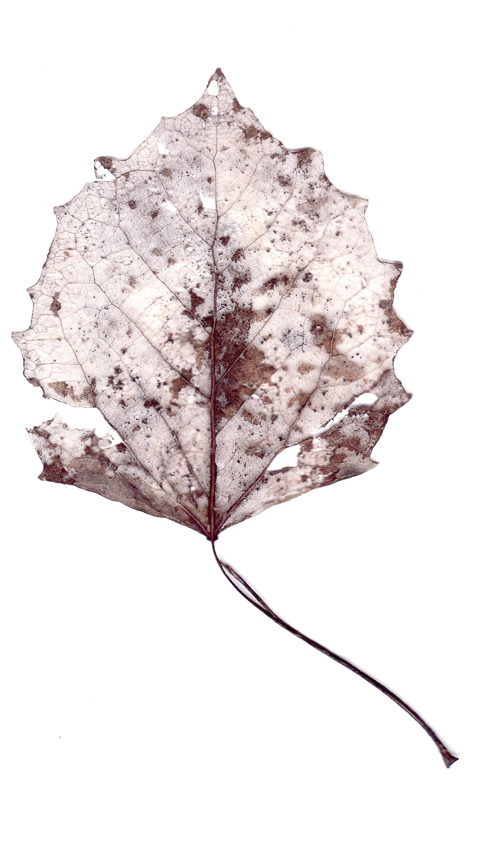 leaves0006.jpg