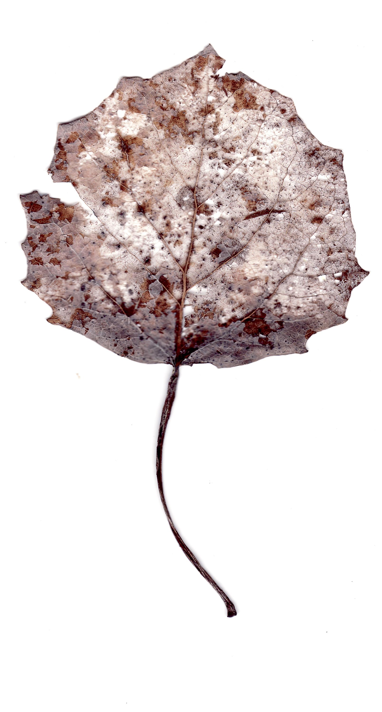 leaves0013.jpg