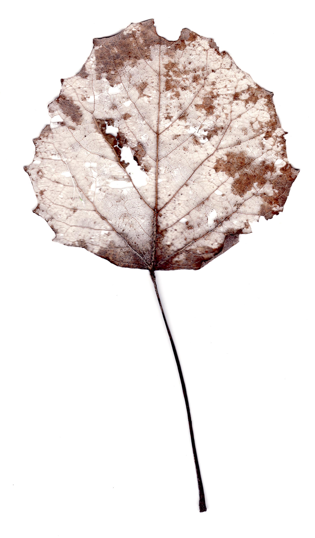 leaves0015.jpg