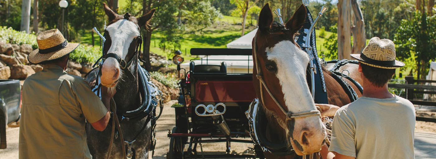 Horse-and-carriage-5.jpg