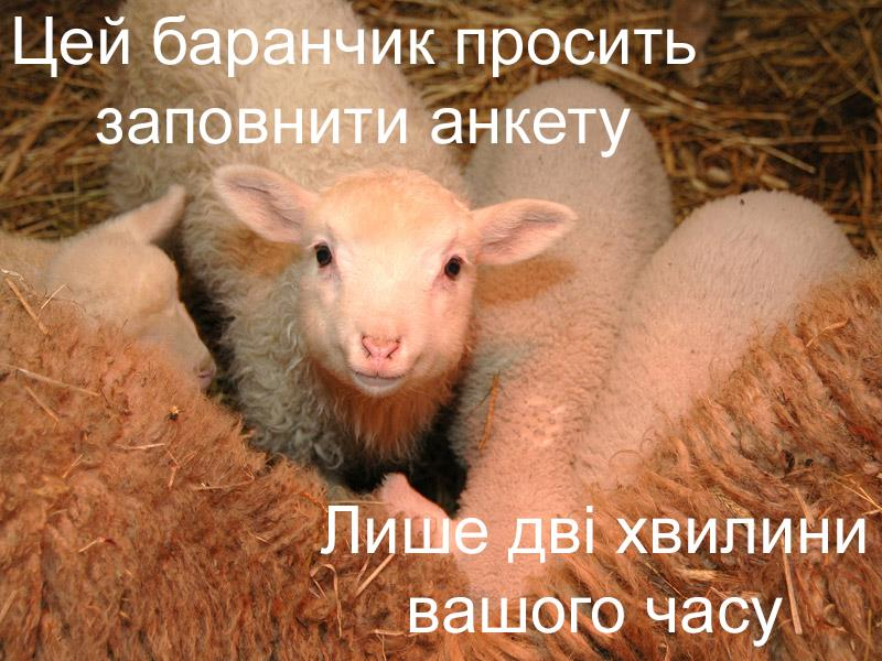 First image in a Meme series prompting visitors to take our online survey: This little lamb wants you to take our survey! Will you take our survey?