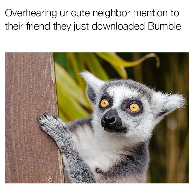 Bumble_4.jpg