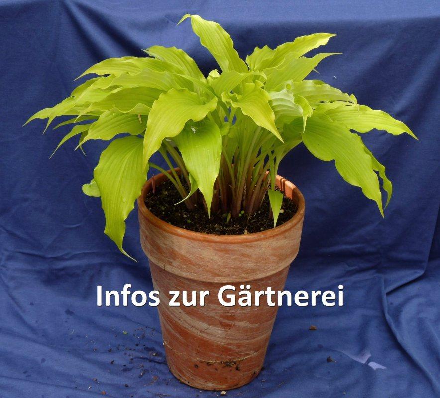 Bild_Infos_Gärtnerei_800.jpg