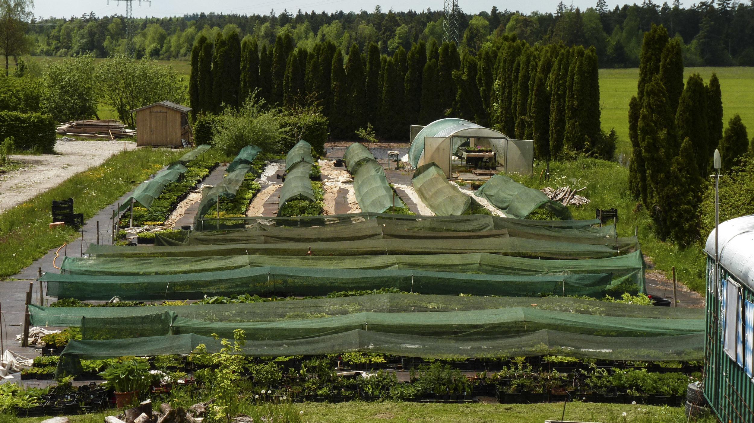 Gärtnerei Freiland_Anzucht.jpg