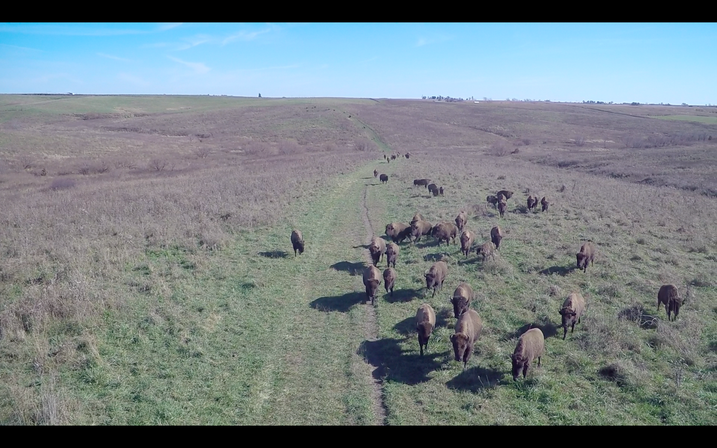 2016 11 18 dunn bison ranch.png