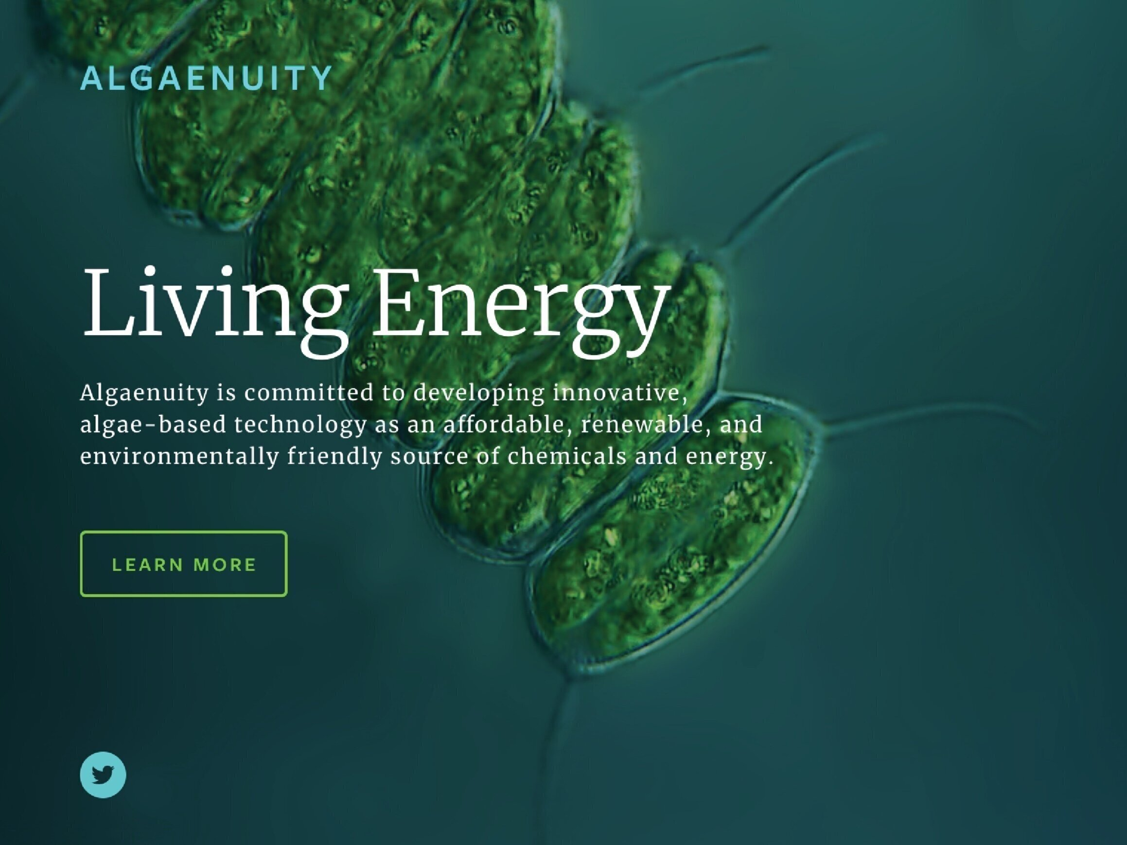 Algaenuity - Brand Identity and Website