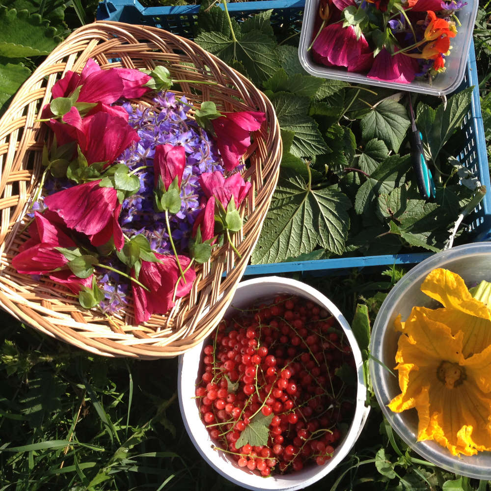 Produce and ingredients from our own plot