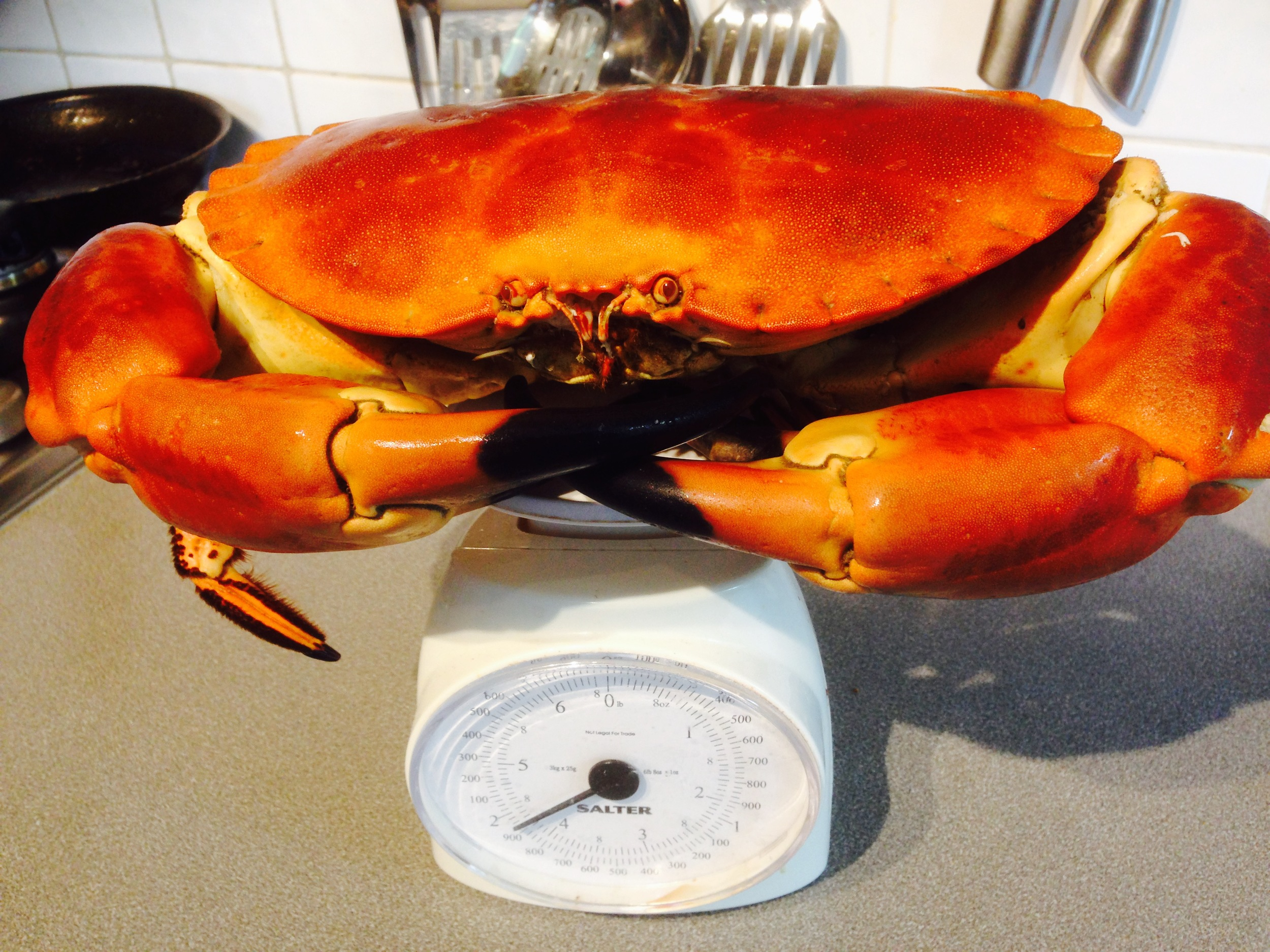 A giant fresh crab