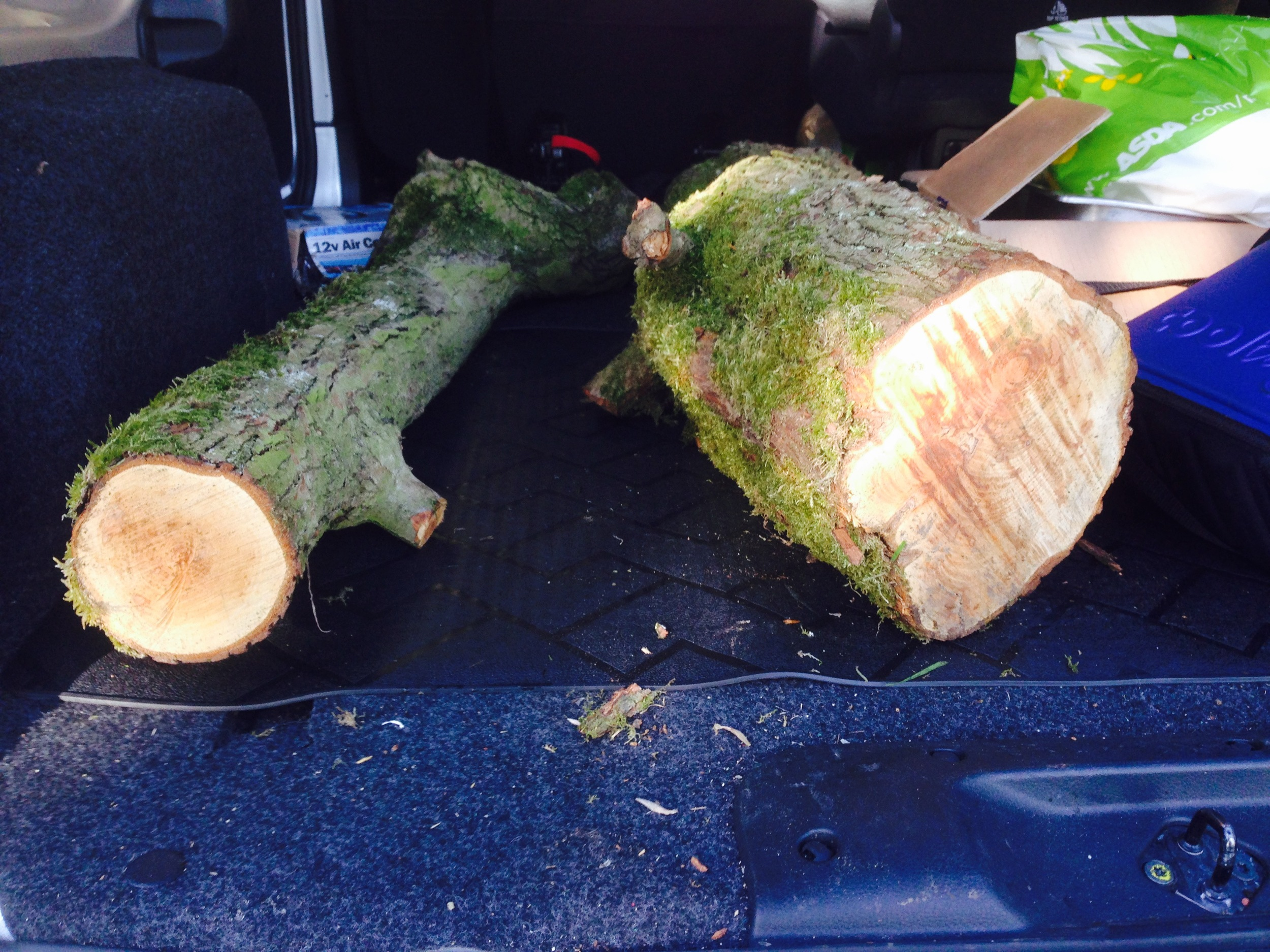 Local wood for pizza oven