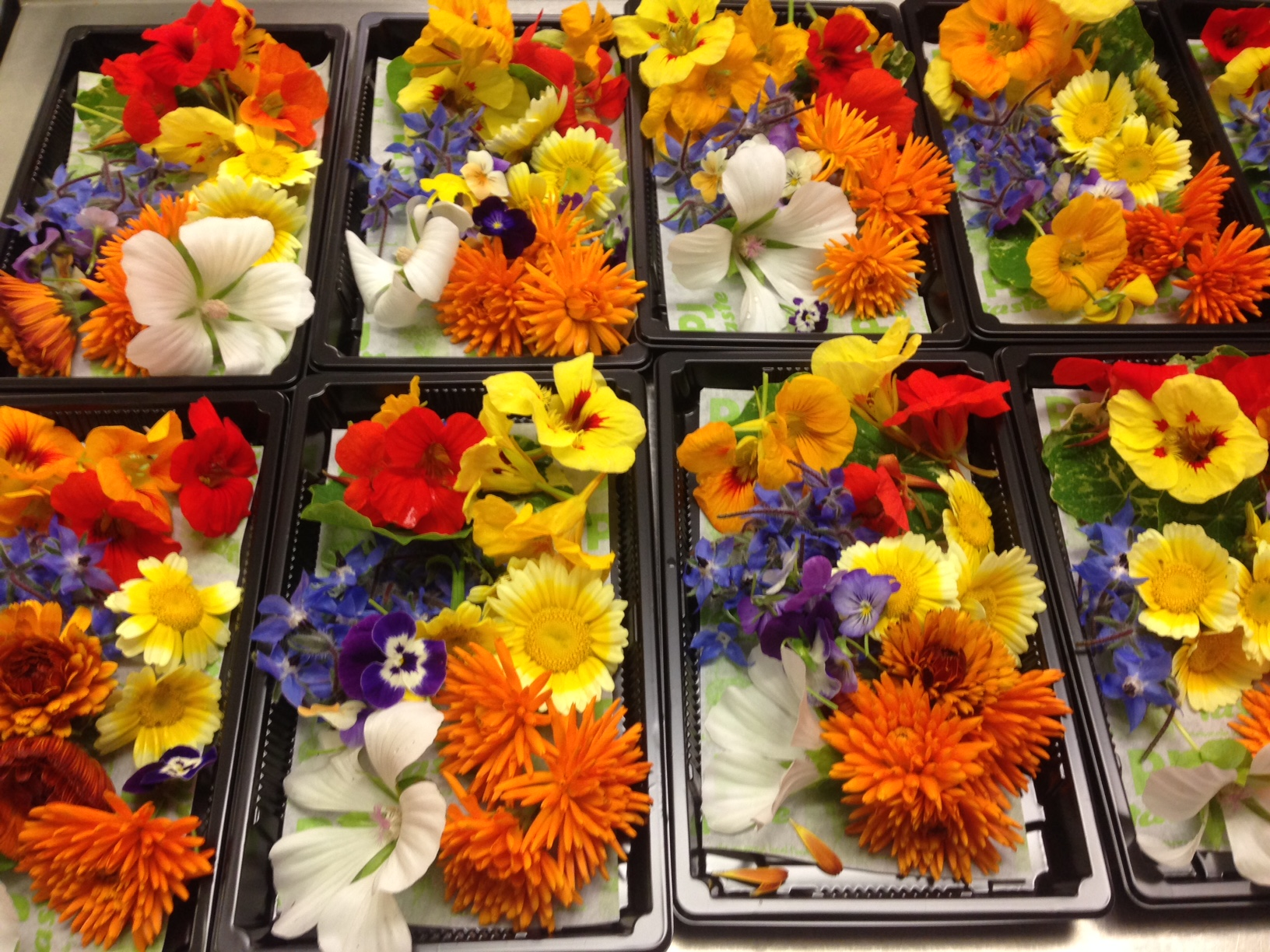Selection of PJ taste grown edible flowers