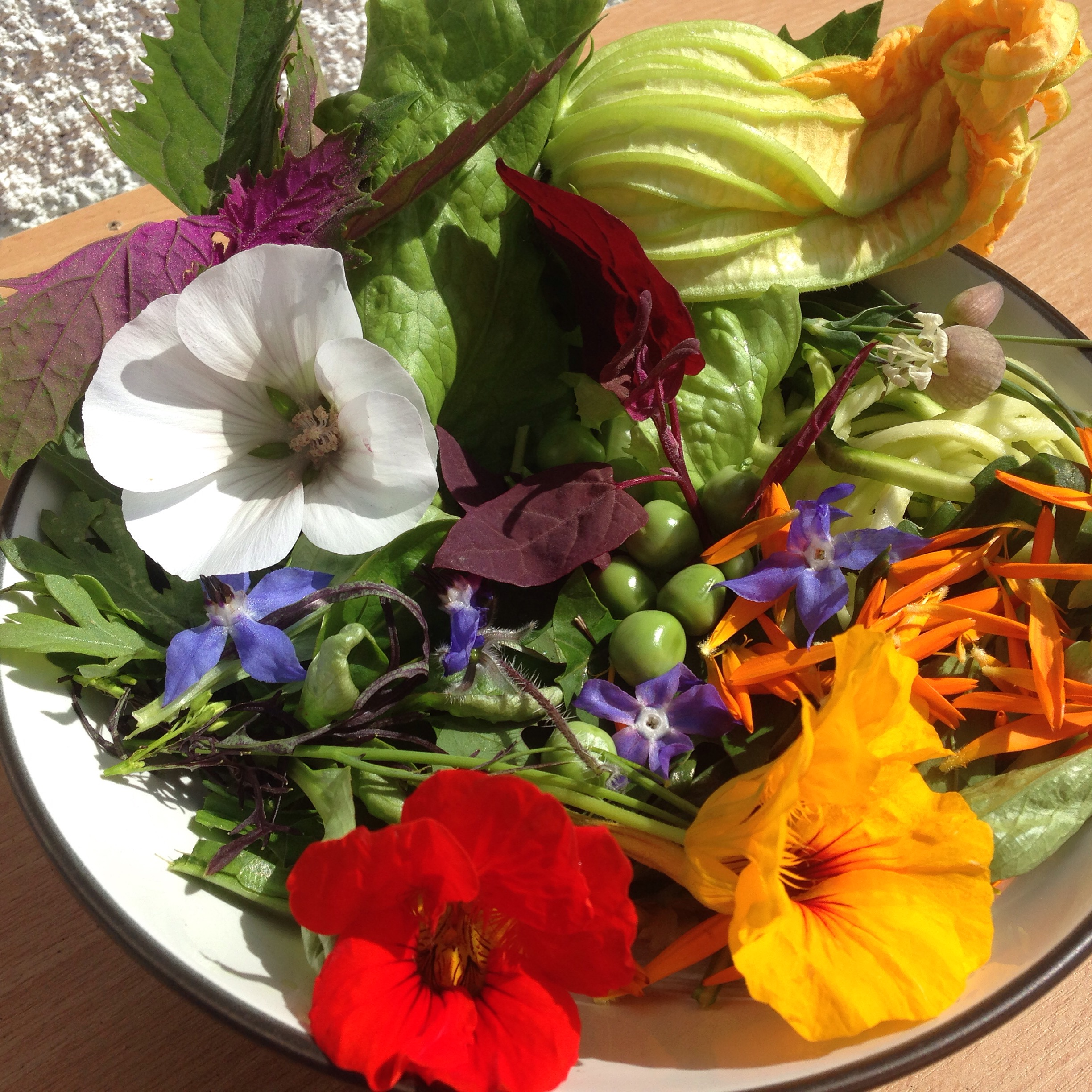 Edible flowers all grown by PJ taste
