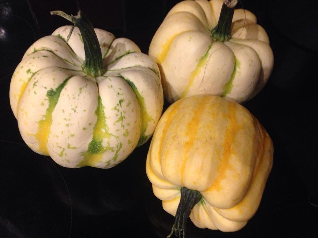 Selection of squash