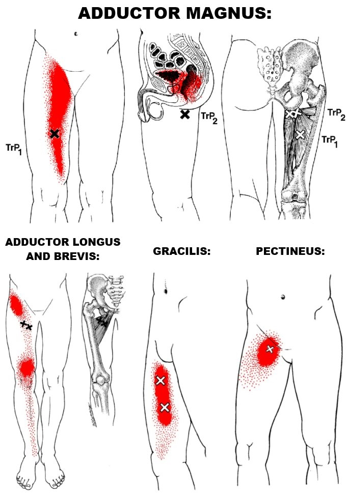 hip-adductors-trp.jpg