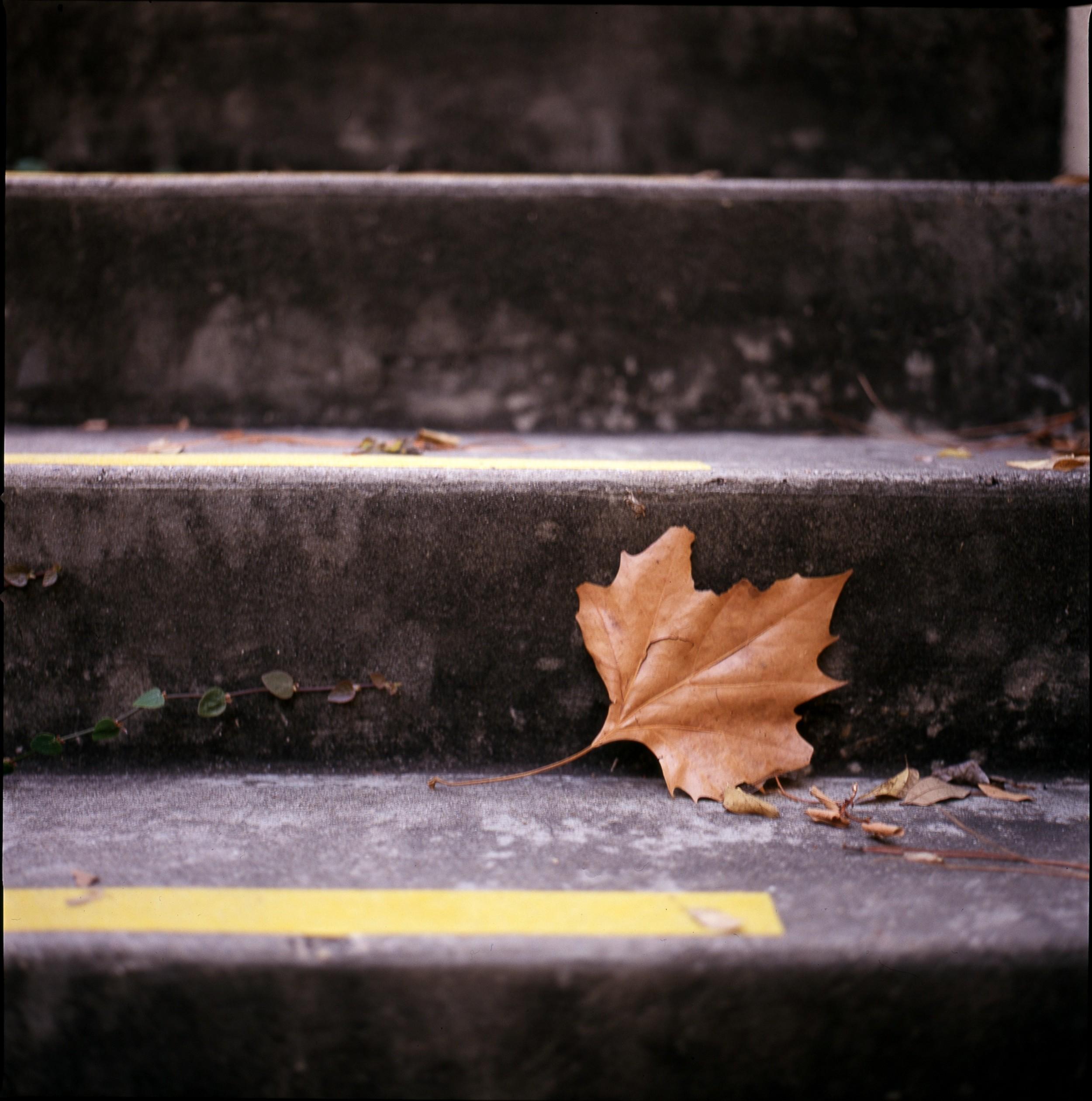 Take a Leaf of Paper