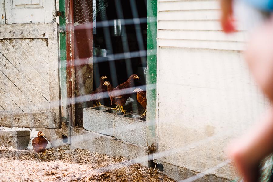 Rodale Farm Wedding Photographer Rodale farm portraits Rodale farm photos Philadelphia Wedding Photographer Longbrook Photography-24.jpg