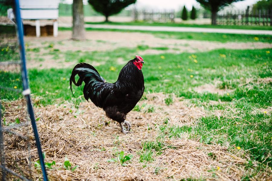 Rodale Farm Wedding Photographer Rodale farm portraits Rodale farm photos Philadelphia Wedding Photographer Longbrook Photography-27.jpg