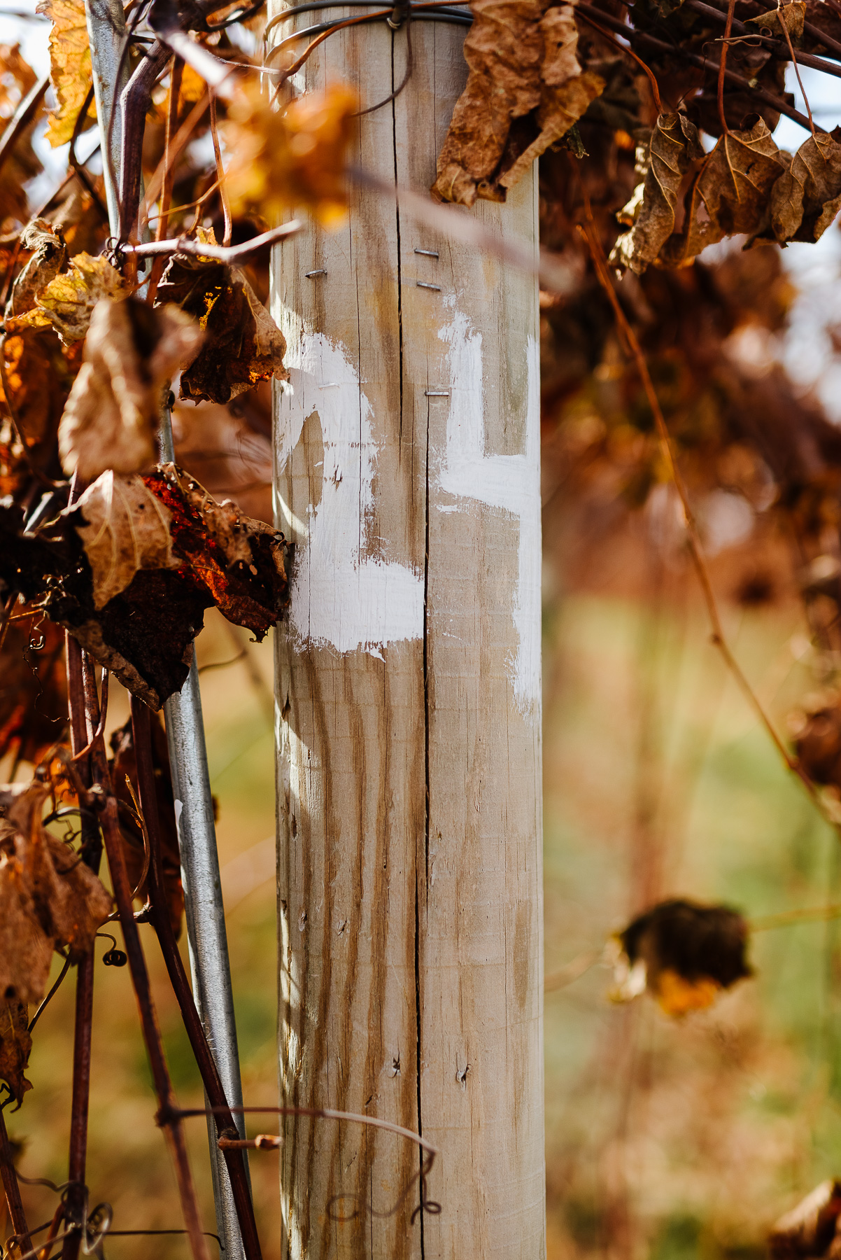 53-Laurita Winery Wedding New Jersey Wedding Photographer Laurita Winery Weddings Longbrook Photography.jpg