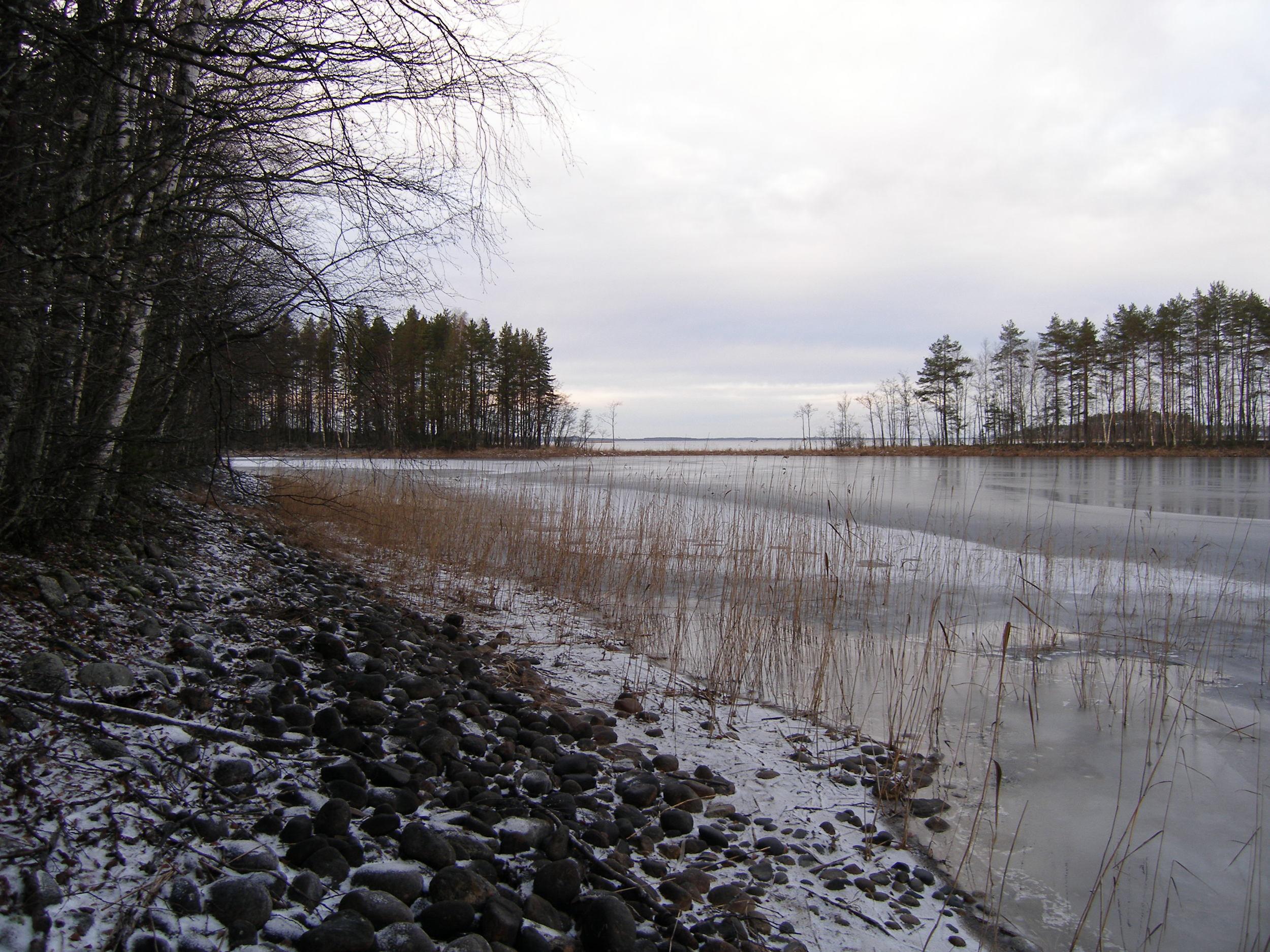 Залив зимой