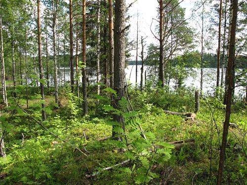 5-2 лес.jpg